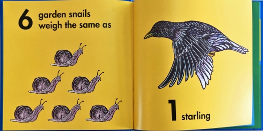 How Much Does a Ladybug Weigh? Snails & Starling